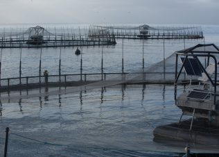 Huon Aquaculture takes out top seafood industry accolade