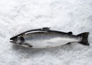 Huon's proposal to temporarily harvest salmon in Norfolk Bay