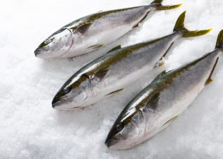 Kingfish joint trial moves to next stage